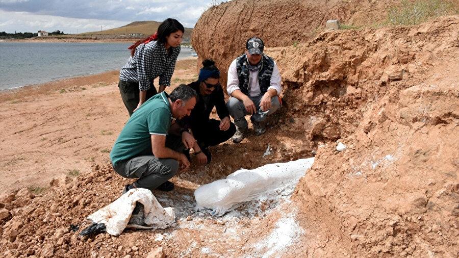 Kazı çalışmalarında fosil bulundu