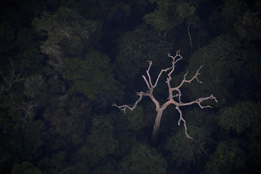 Amazon ormanları insanlar tarafından büyük bir tahribatla karşı karşıya.
