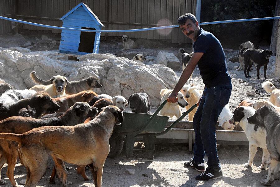 Barınakta yaşayan hayvanların şartlarının iyileştirilmesi de gündemde.