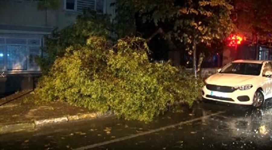 Şiddetli rüzgarın etkisiyle ağaçlar devrildi. -DHA