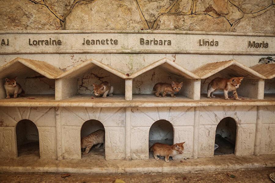 Barınakta kalan kedilerin kendi isimlerinin yazılı olduğu yuvaları.