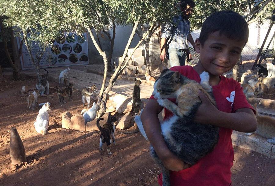Çocuklar için de oyun alanları inşa edilen barınakta kedilerle ilgilenen Halepli bir çocuk.