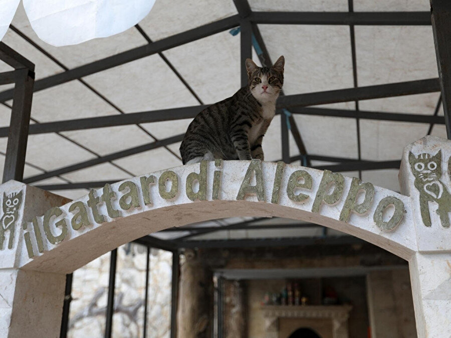 Kafr Naha'daki barınak.