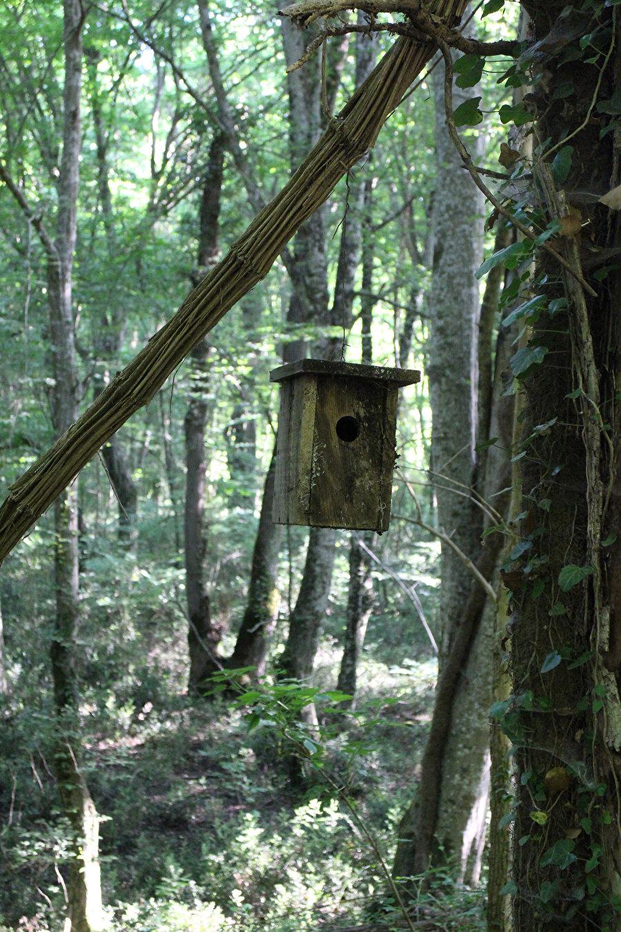 Millî Parklar Şube Müdürlüğü ağaçlara asıyor, genelde bunları kabulleniyor kuşlar. Bu yuvaların asılmasında niyet iyi ama bazen yanlış giriş çapına sahip yuvaların kurulup yanlış türlerin olduğu yerlere asıldığını görüyorum.
