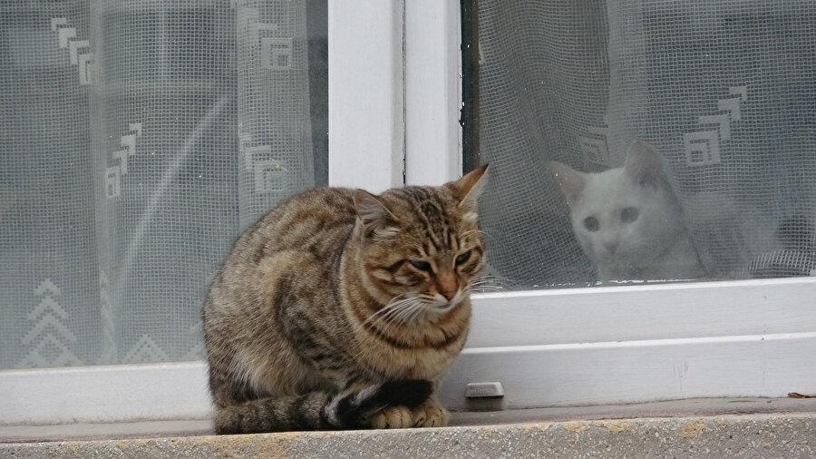 Soğuk havanın acı yüzü objektiflere hayvanları üzerinden yansıdı.