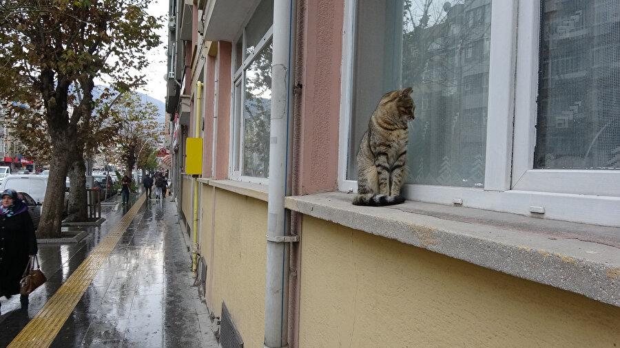 Sokak kedisi evde bulunan kediye bakıyor.