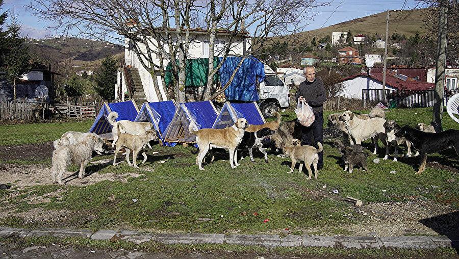 Sokak hayvanları için yapılan kulübelere bölge halkı da ilgi gösteriyor.