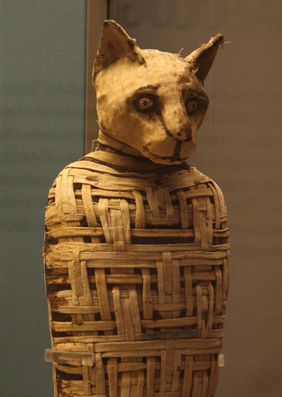 Mısır'da kedi öldürmek yasak olduğu için kedi öldürmenin cezası da ölüm idi.