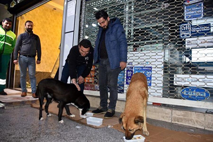 Adıyaman esnafı sokak köpeklerine yemek de verdi.