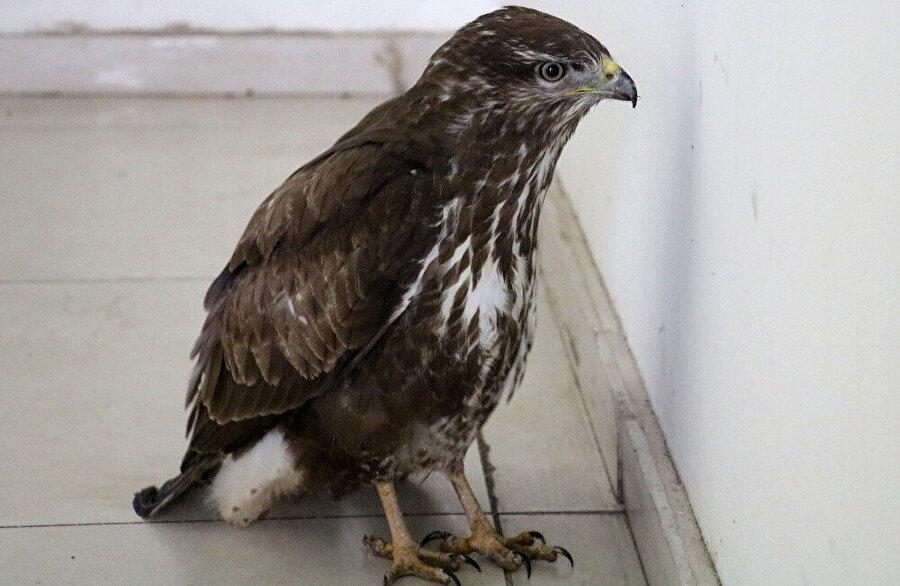 Kuşun kanatlarının kırık olduğu anlaşıldı.