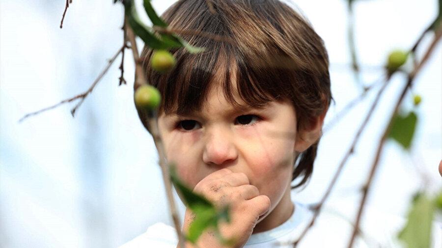 Rize'de kışın ortasında meyve veren ağaçtaki eriklerin tadına çocuklar baktı.