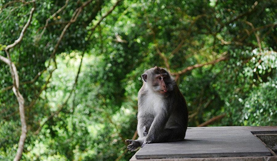 Ubud, Maymun Ormanı
