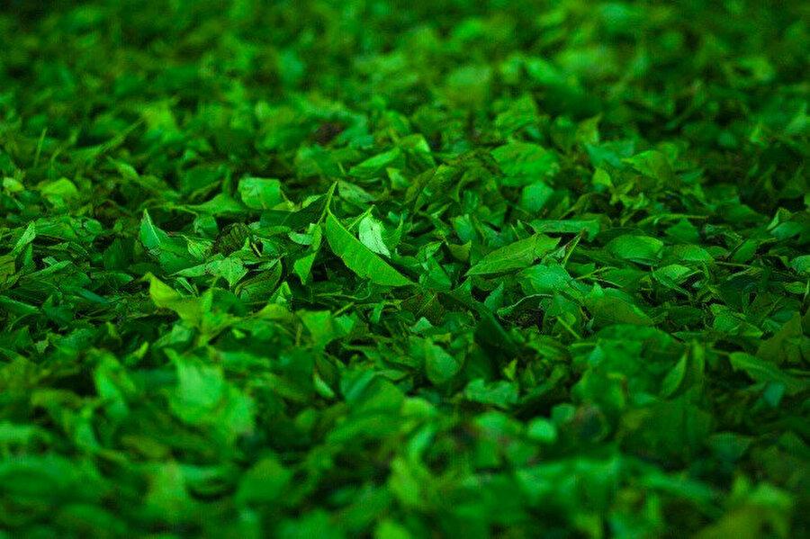 Metabolik hızı artırmaya yönelik etkisi olan yeşil çay, içeriğinde flavonoidler (bitkiye rengini veren antioksidan madde), kateşinler (çok güçlü antioksidan aktiviteye sahip madde) ve polifenoller (geniş bir antioksidan grubu) sayesinde vücudun direncini artırır..