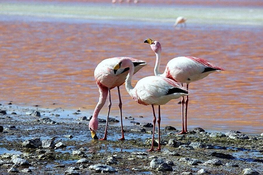 Atamaca, farklı türlerdeki flamingolara ve bölgenin en karakteristik kuşlarına ev sahipliği yapıyor.