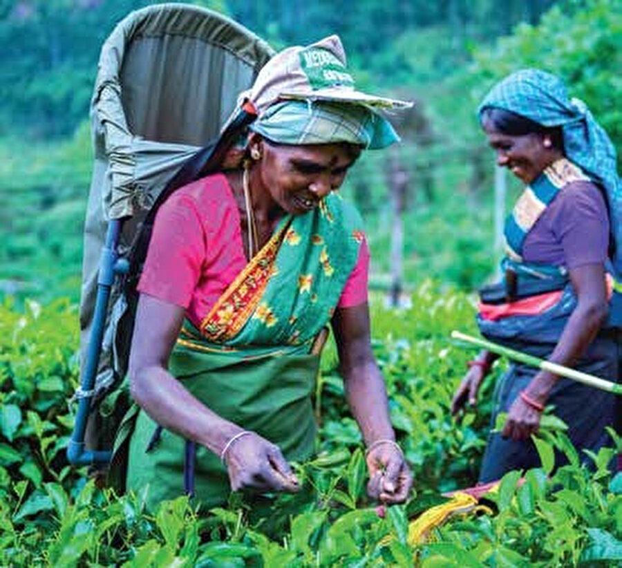 Nuwara Eliya dünyanın önemli çay yetiştirme alanlarından bir tanesi.