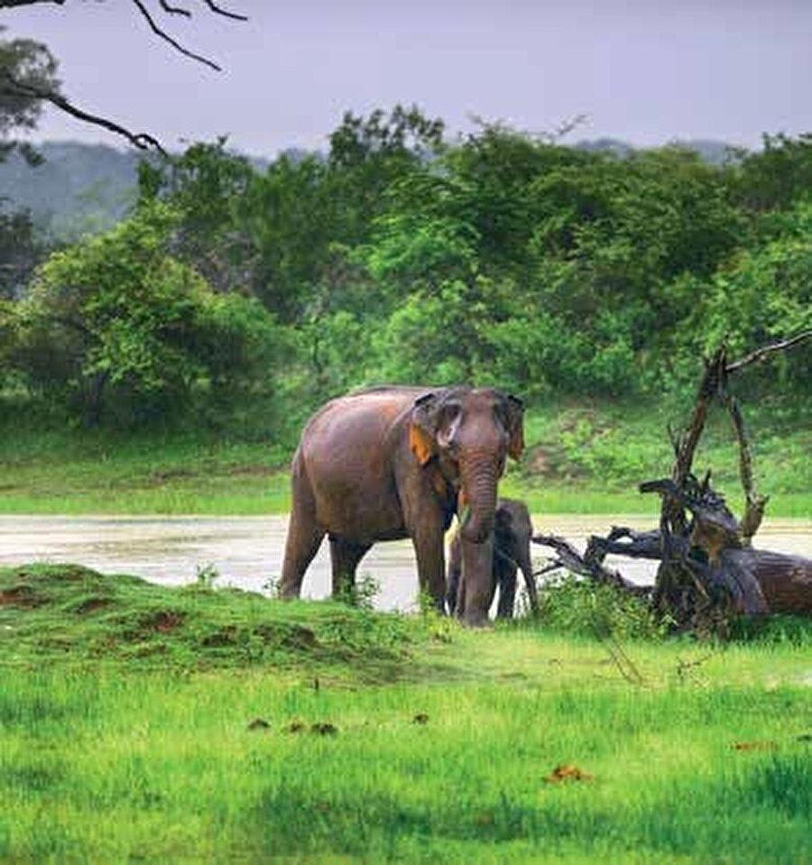 Pinnewela Fil Yetimhanesi bakıma muhtaç filleri koruma altına alan ve bakımlarını sağlayan bir yer.