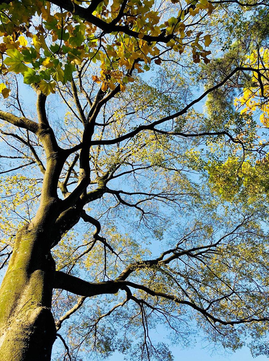 Ağaç, kendine idrak için yanaşan bu çocuğa dallarını eğmiştir.