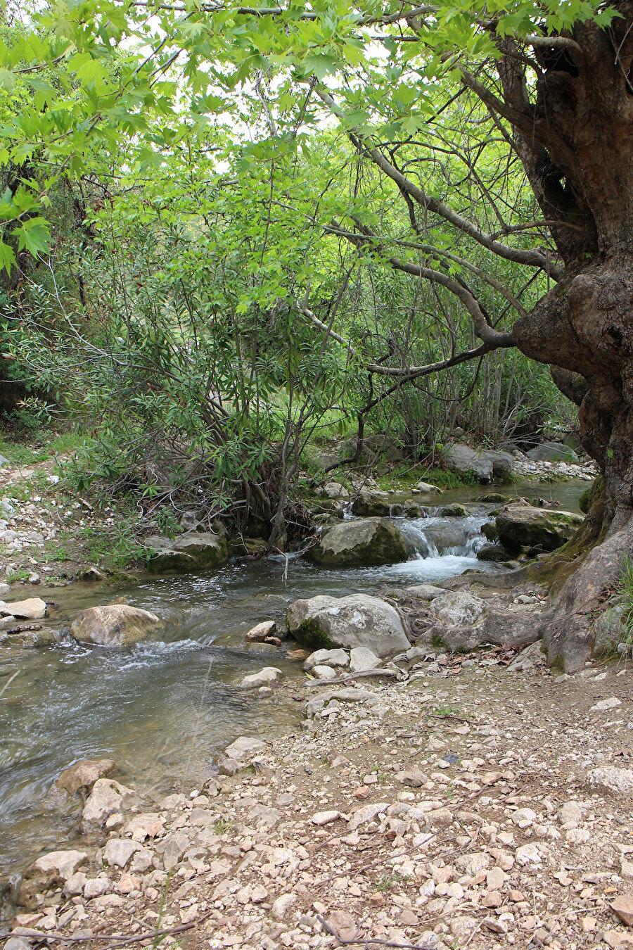 Suyun kokusunu alınca hemen sarhoş olmamalı. Eğreltilerin, atkuyruklarının dibine çöreklenmiş, yosunlu kayalar üzerinde kayan siyah ve ürkek yılanların diyarı orası.