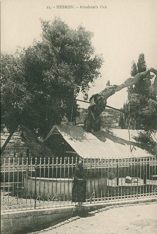 El Halil'de bulunan ve Hz. İbrahim'in ismiyle de anılan meşe ağacı.
