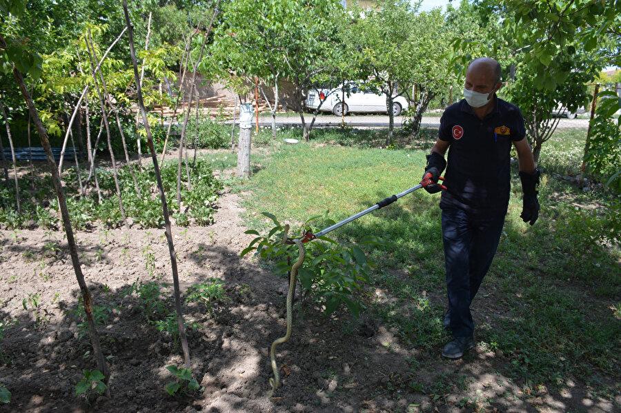 Tokat'ın Zile ilçesinde, evin bahçesine yılan girdi