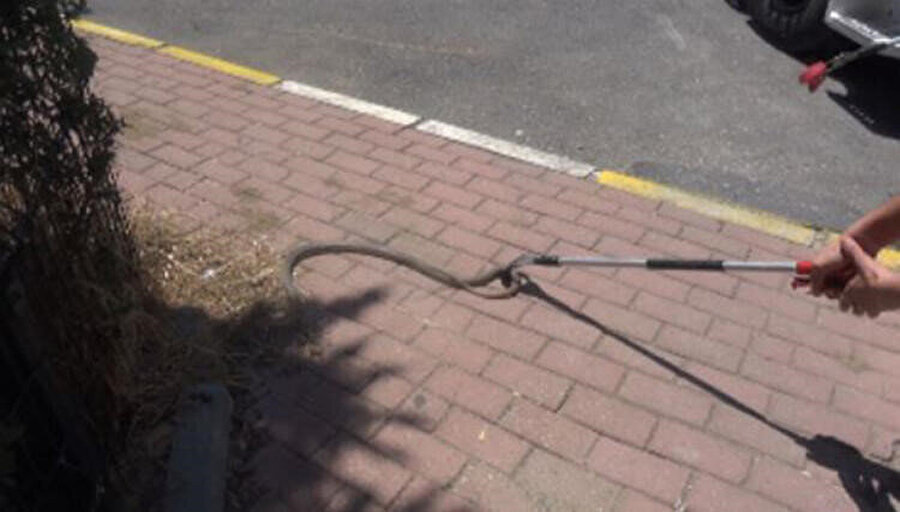 İstanbul'da 2 metrelik dev yılan görüldü