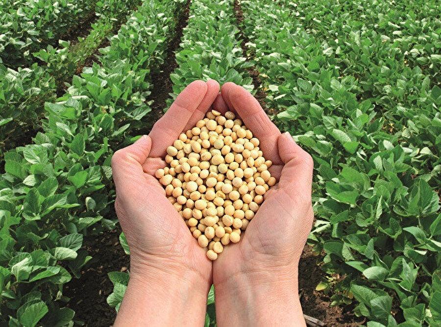 """Bugün birçok organik üretici grubu, hibrit tohum gibi genetik mühendislik mahsullerinin """"geleneksel"""" ve dolayısıyla doğal tohum üretim yöntemlerine eşdeğermiş gibi gösterilerek genetik mühendislik sürecinin gizlendiğinden mustaripken bizdeki hibrit tohum aklayıcıları işin bu tarafıyla pek ilgilenmiyorlar."""