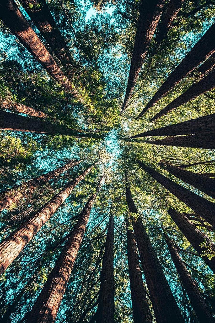 Bir ses saplanır kara ormanın kalbine, Ekho'nun ölümle paslanmış sesidir bu, hiç durmadan yankılanır.
