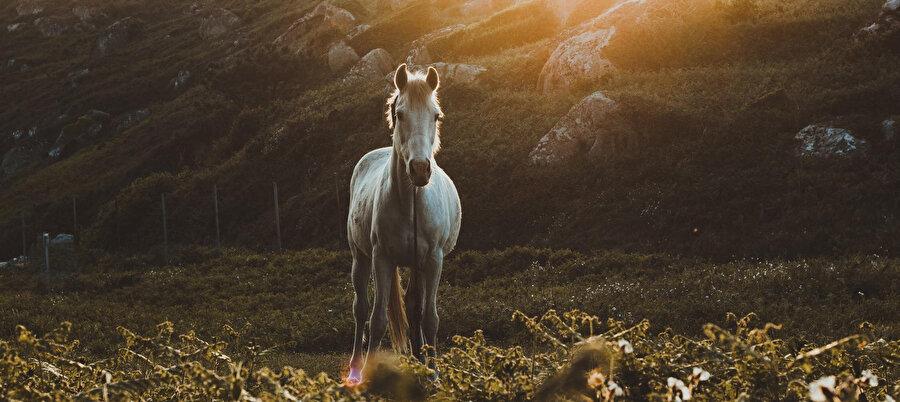 Atını bağlarken güneşin arkasına sığındığı dağın ortasında parlak bir ışık gördü.
