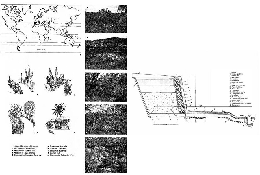 Ekosisteme göre seçilen bitki türleri ve katmanlaşma kesiti.