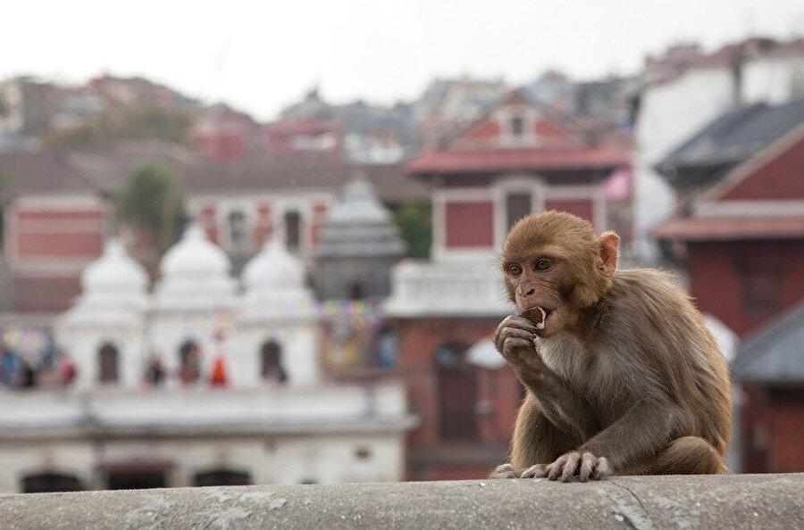 Nepal, Güney Asya'da Çin ile Hindistan arasında yer alan bağımsız bir ülkedir.