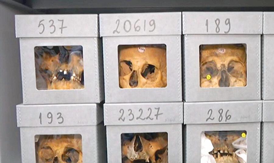 Paris'teki İnsan Müzesi'nde Cezayirli şehidlere ait kafatasları