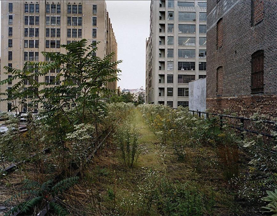 Yabani otların büyüdüğü bakımsız High Line.