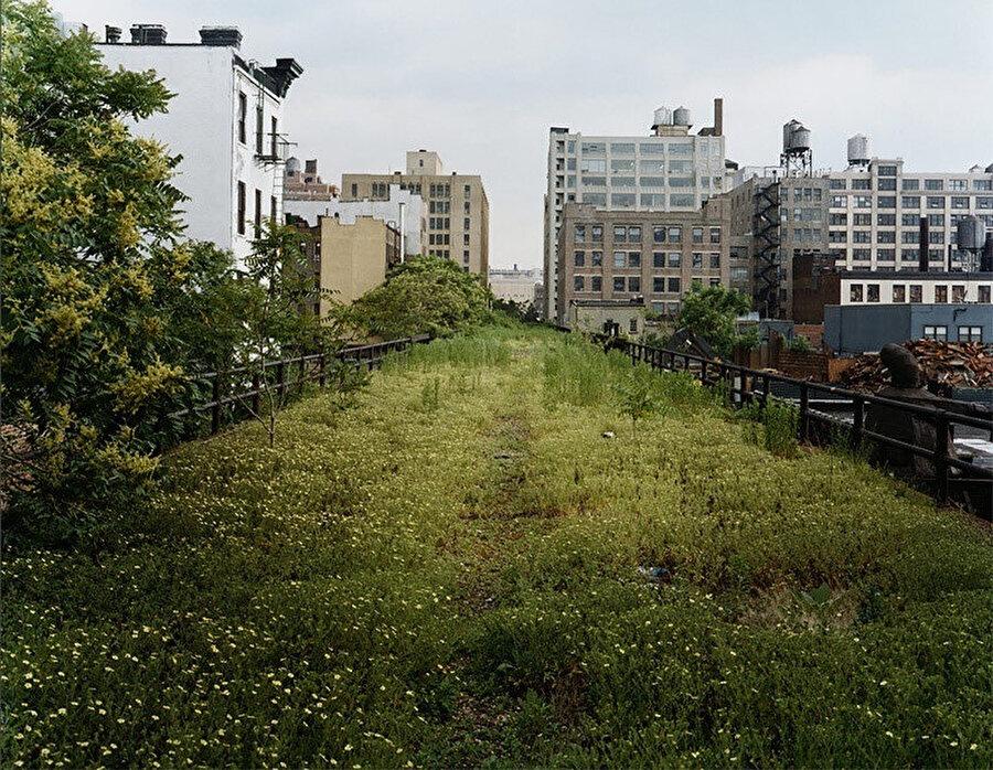 Yabani otların büyüdüğü High Line.