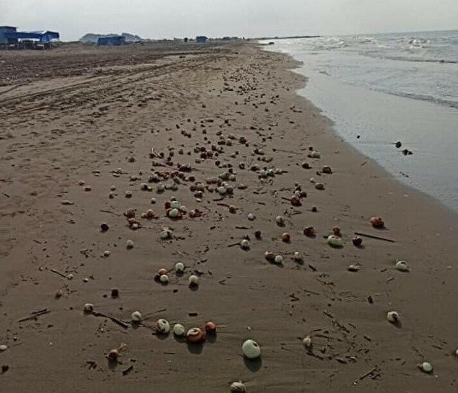 Soğanlar sahile vurdu