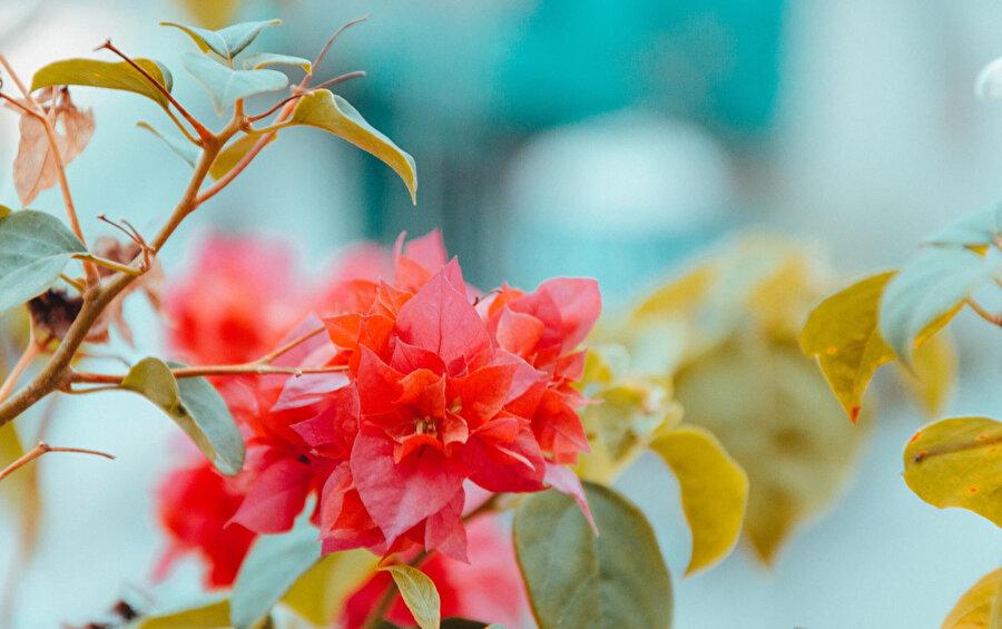 Tören ve kutlamaların vazgeçilmez mekânları olan bahçeler tarih içerisinde doğaldan yapaya bir seyir izlemektedir.