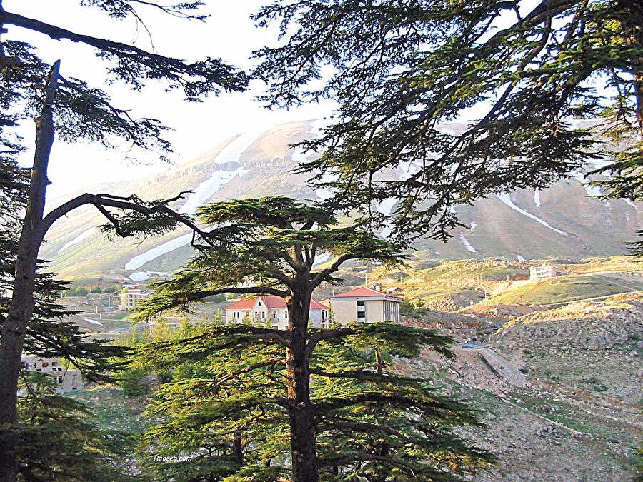 Lübnan, Sedir ağaçlarıyla kaplı güzel bir ülke.