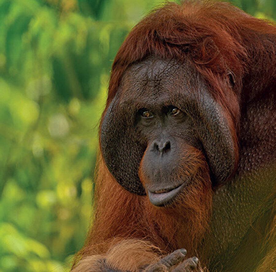 Borneo yüzölçümü açısından dünyanın en büyük üçüncü adasıdır. Güneydoğu Asya'da bulunur.
