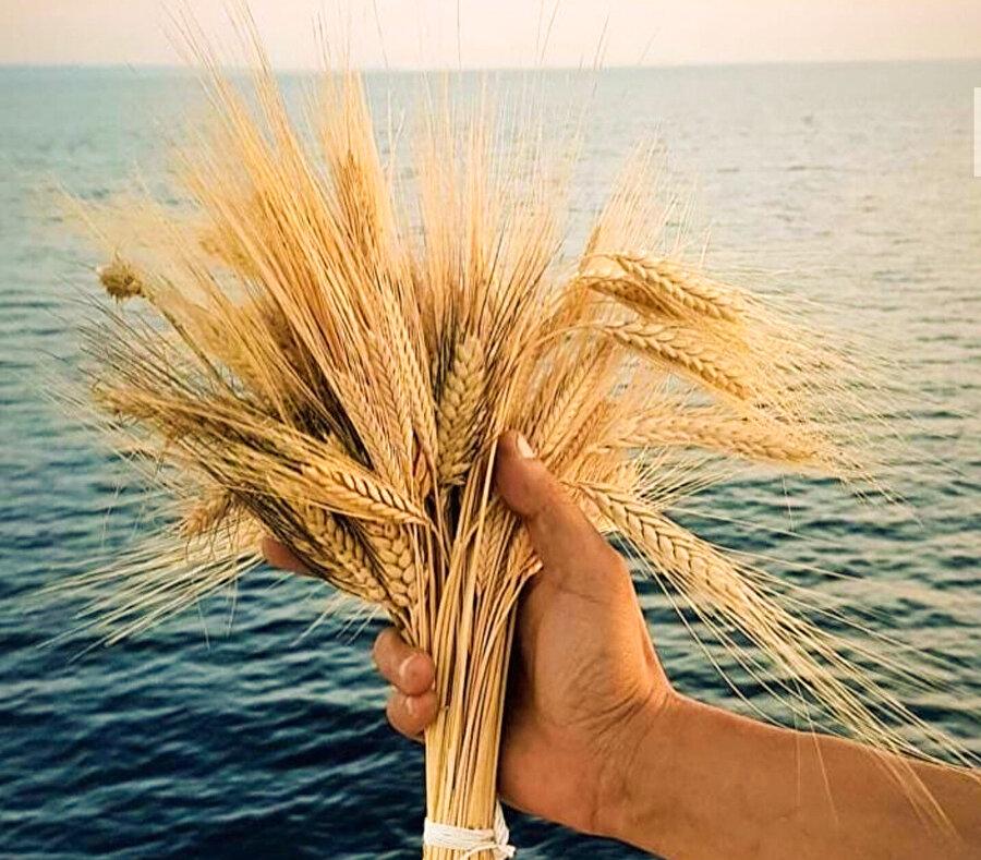 """Çiftçi elinde devamlılığını sağlayan köy popülasyonu buğdaylara """"atalık buğday"""" diyoruz."""
