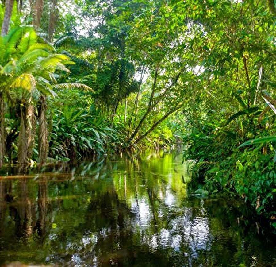 Amazon'un ağzı 1500 yılında Vicente Pinzon tarafından keşfedilmiş, nehrin kaynaklarıysa ancak 1941'de Bertrand Flornoy'un yönettigi ekip tarafından bulunmuştur.