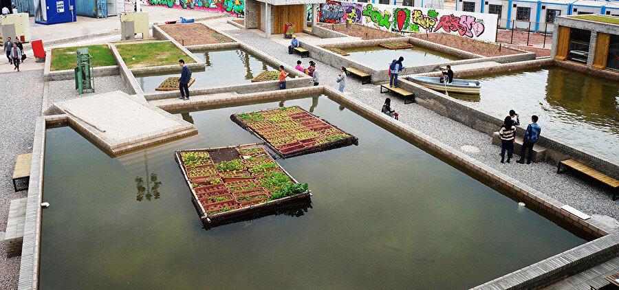 Thomas Chung, Shenzhen'deki Şehircilik\Mimarlık Bi-City Bienali (UABB) için akuaponik ve yosun yetiştirme, su filtreleme ve sürdürülebilir gıda üretimi deneyleri için Floating Fields projesini tasarlamış.