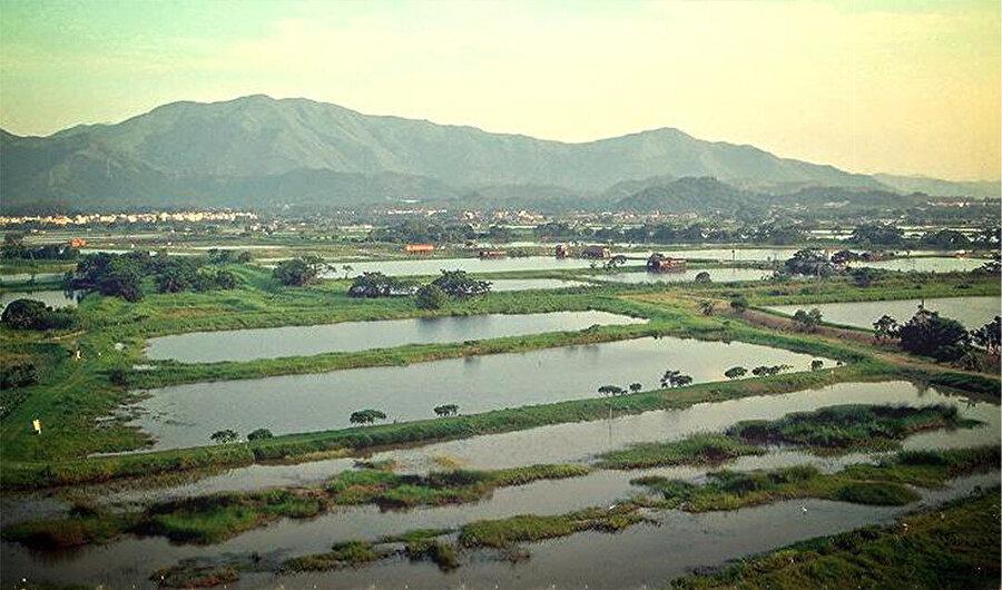 Bölge bir zamanlar büyük ölçüde balık havuzlarına ve su bazlı ticarete dayanıyor olsa da artık tamamen endüstriyel bir bölge. Shenzen'in 40 yıl öncesindeki doğal hali.