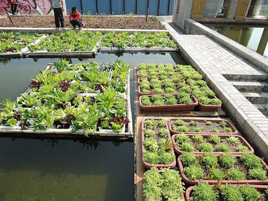 Floating Fields projesi Shenzen bölgesinde eskiden var olan tarım faaliyetlerinden ilham alıyor ve benzer teknikleri yaşatıyor.