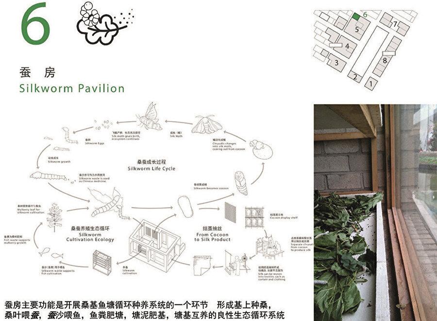 6. Adım: İpek Böceği Pavyonu; 5. göletteki döngüye yardımcı olan ipek böceklerinin de kendi içerisinde ayrı döngüsü bulunuyor. İpek Böcekleri, ekosistemin parçası olmanın yanında ayrıca kozalarından ipek tekstili elde etmek için de yetiştiriliyor.