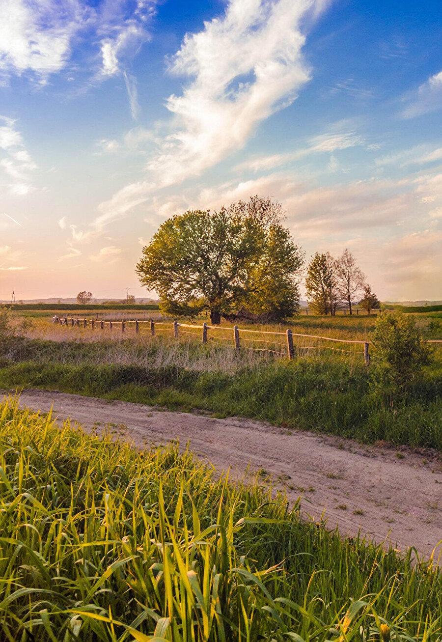İnce ve uzun, her yanından ağaç dalları sarkan yolları geçip köyün girişindeki köprüde indi.
