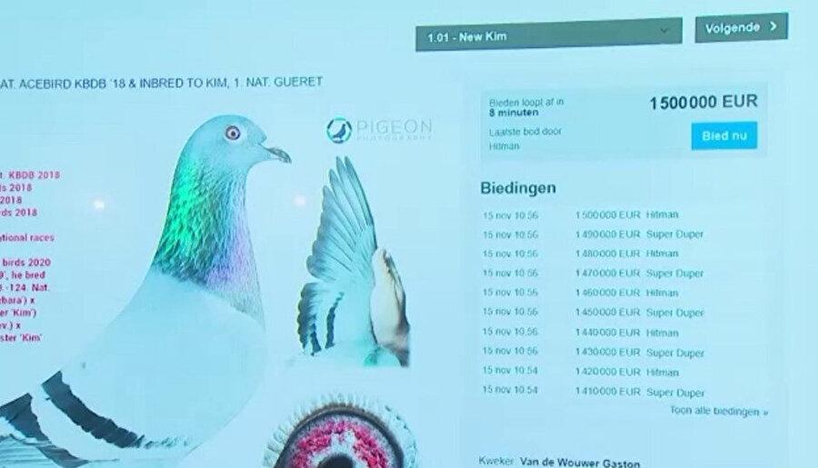 Avrupa'nın en pahalı güvercini oldu
