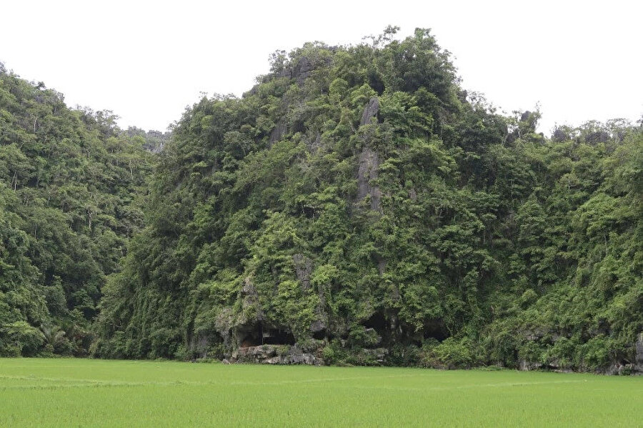 Sulawesi Adası'nda yer alan Leang Tedongnge Mağarası.
