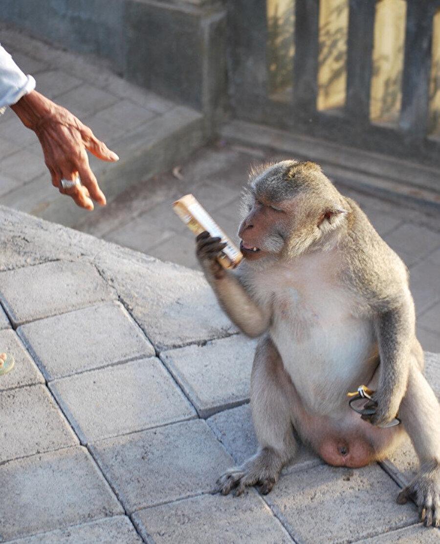 Pazarlık yapan bir maymun