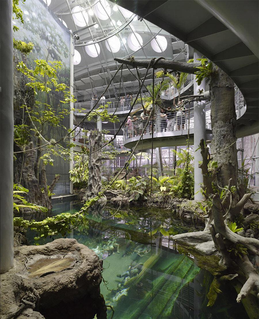 Müzenin içinde bulunan akvaryumda, köpek balıkları ve denizin derinliklerinde görülen çeşitli canlılar yaşıyor.