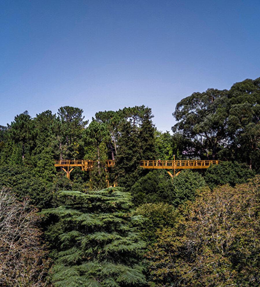 Yürüyüş yolu, parkın panoramik görüntüsünü sunuyor.