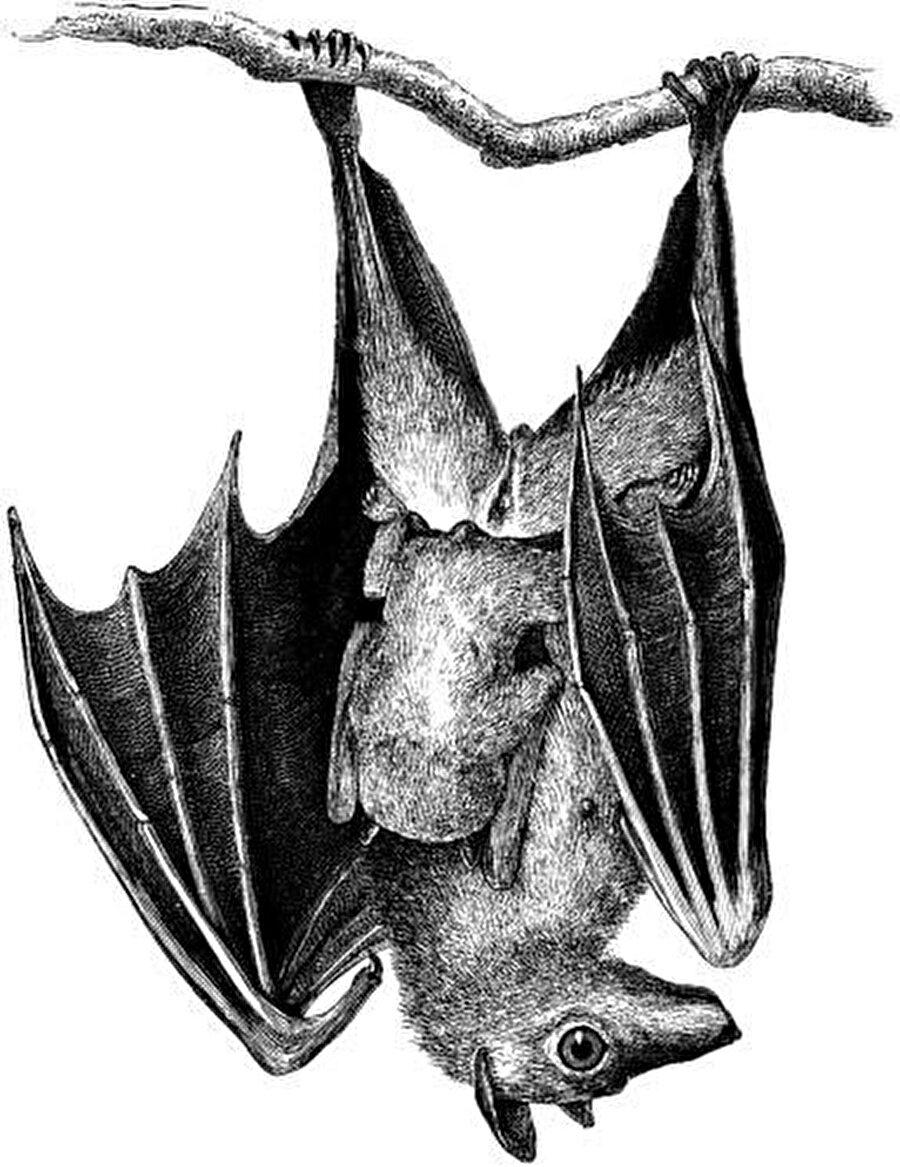 Uçabilen tek memeli, baş aşağı asılarak dinlenen kuş, korku filmlerinin, fantastik hikâyelerin en önemli figürlerinden biri.